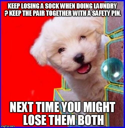bad puppy | KEEP LOSING A SOCK WHEN DOING LAUNDRY ? KEEP THE PAIR TOGETHER WITH A SAFETY PIN. NEXT TIME YOU MIGHT LOSE THEM BOTH | image tagged in laundry,socks,sock,puppy,cute puppy,smartass | made w/ Imgflip meme maker