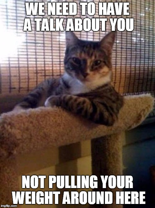 The Most Interesting Cat In The World Meme Imgflip