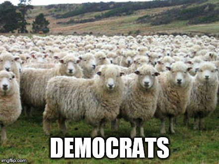 Hillary Supporters | DEMOCRATS | image tagged in hillary supporters | made w/ Imgflip meme maker
