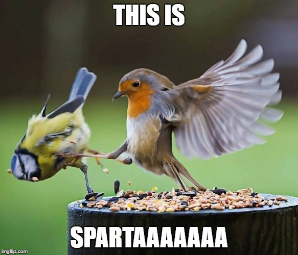 This is Sparta | THIS IS SPARTAAAAAAA | image tagged in bird,kick,sparta leonidas,this is sparta | made w/ Imgflip meme maker
