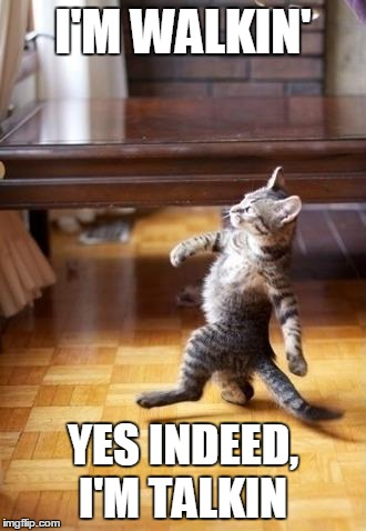 Ladies and Gentlemen Cats Domino! |  I'M WALKIN'; YES INDEED, I'M TALKIN | image tagged in memes,cool cat stroll | made w/ Imgflip meme maker