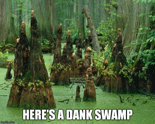 HERE'S A DANK SWAMP | made w/ Imgflip meme maker