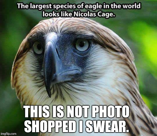 No photoshop | THIS IS NOT PHOTO SHOPPED I SWEAR. | image tagged in nicolas cage,eagles | made w/ Imgflip meme maker