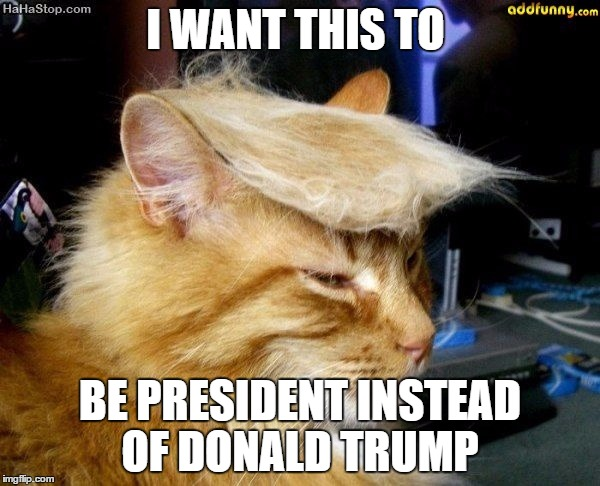 donald trump cat |  I WANT THIS TO; BE PRESIDENT INSTEAD OF DONALD TRUMP | image tagged in donald trump cat | made w/ Imgflip meme maker