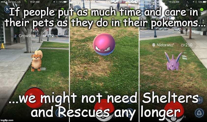 Pokemon Pets?(Feel free to re-post & Share) | If people put as much time and care in their pets as they do in their pokemons... ...we might not need Shelters and Rescues any longer | image tagged in pokemon,animal rescue,dog rescue,adopt don't shop | made w/ Imgflip meme maker