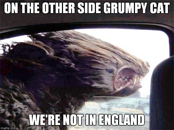ON THE OTHER SIDE GRUMPY CAT WE'RE NOT IN ENGLAND | made w/ Imgflip meme maker