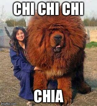 Big Red Dog | CHI CHI CHI CHIA | image tagged in big red dog | made w/ Imgflip meme maker
