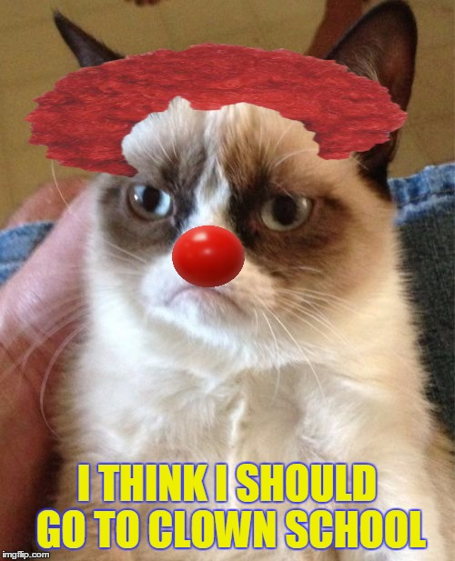 Grumpy Cat Meme | I THINK I SHOULD GO TO CLOWN SCHOOL | image tagged in memes,grumpy cat | made w/ Imgflip meme maker