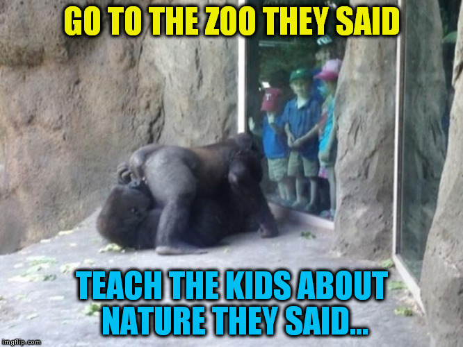 When the kids got home that night, mom and dad were not ready for the big question! | GO TO THE ZOO THEY SAID TEACH THE KIDS ABOUT NATURE THEY SAID... | image tagged in zoo,funny meme,teaching,kids,omg,laugh | made w/ Imgflip meme maker