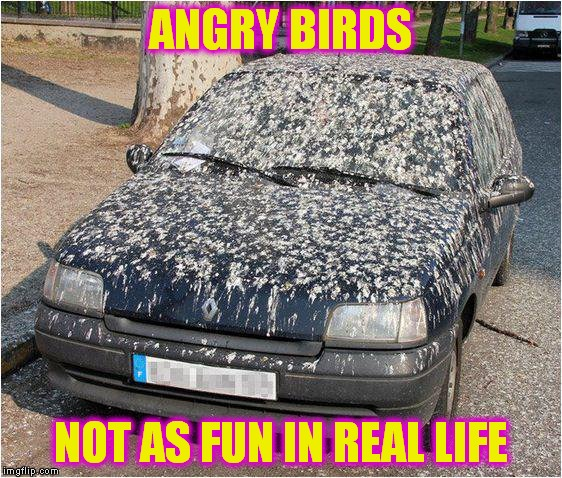 ANGRY BIRDS NOT AS FUN IN REAL LIFE | made w/ Imgflip meme maker