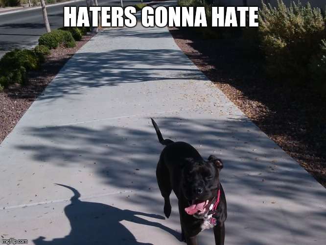 HATERS GONNA HATE | image tagged in pitbulls,dontbullymybread,lover | made w/ Imgflip meme maker
