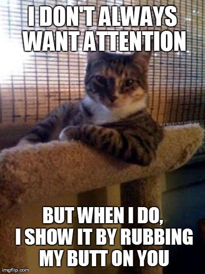 nictating membrane cat