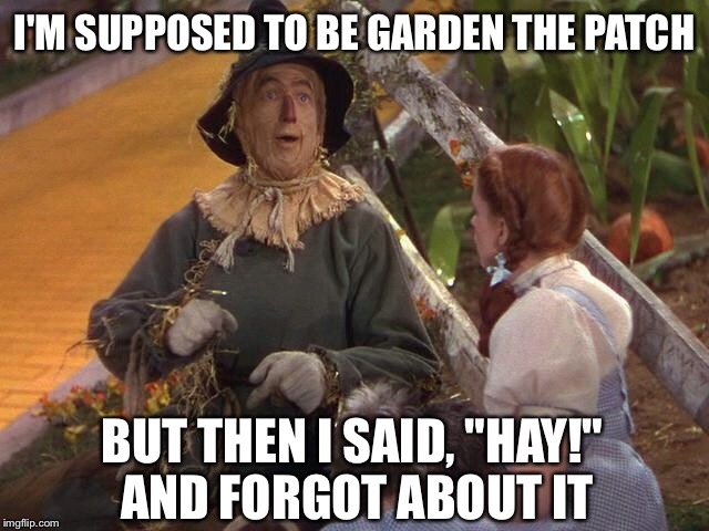 "I'M SUPPOSED TO BE GARDEN THE PATCH BUT THEN I SAID, ""HAY!"" AND FORGOT ABOUT IT 