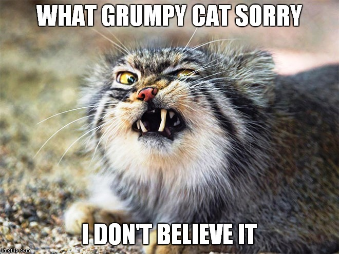 WHAT GRUMPY CAT SORRY I DON'T BELIEVE IT | made w/ Imgflip meme maker