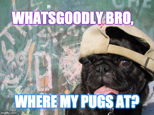 Frat Bro Pug | WHATSGOODLY BRO, WHERE MY PUGS AT? | image tagged in fratboys,pugs,pug,introspective pug,pugdog | made w/ Imgflip meme maker