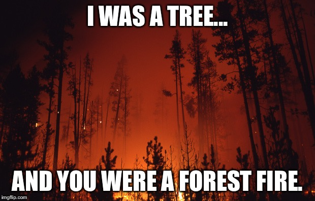 Forest fire | I WAS A TREE... AND YOU WERE A FOREST FIRE. | image tagged in forest fire | made w/ Imgflip meme maker