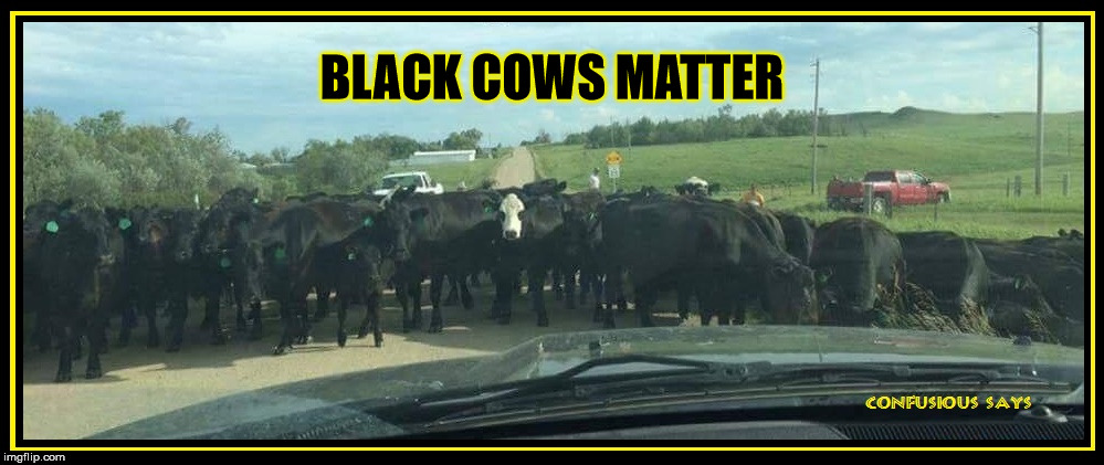 Black Cows Matter |  BLACK COWS MATTER | image tagged in black cows matter | made w/ Imgflip meme maker
