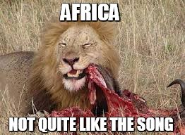 Africa - Song | AFRICA NOT QUITE LIKE THE SONG | image tagged in lion,toto,prey,africa | made w/ Imgflip meme maker