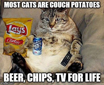Cats Like Chips