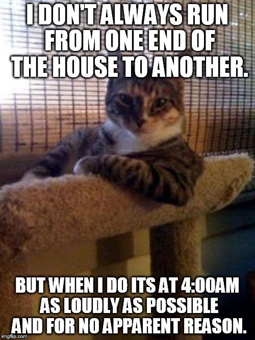 cats | I DON'T ALWAYS RUN FROM ONE END OF THE HOUSE TO ANOTHER. BUT WHEN I DO ITS AT 4:00AM AS LOUDLY AS POSSIBLE AND FOR NO APPARENT REASON. | image tagged in cats | made w/ Imgflip meme maker