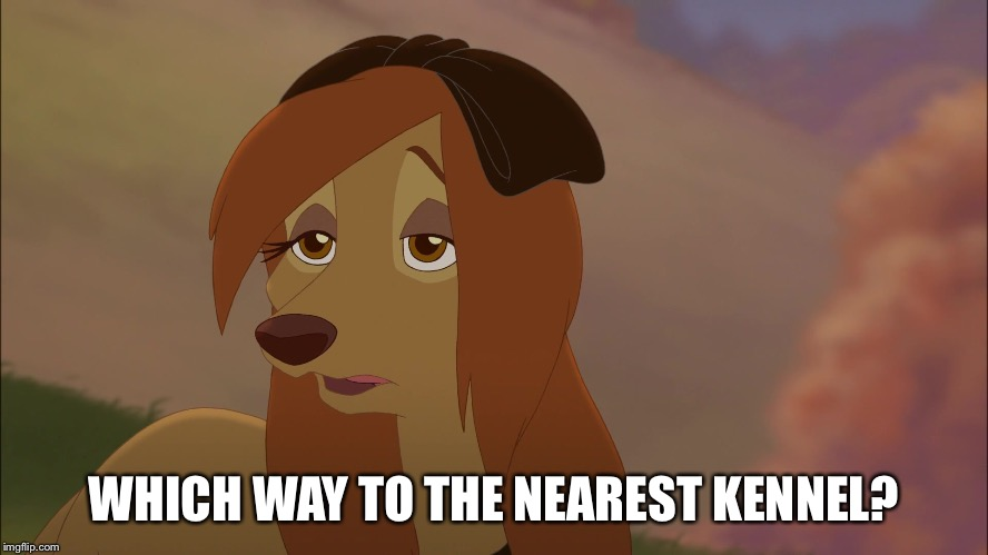 Which Way To The Nearest Kennel? |  WHICH WAY TO THE NEAREST KENNEL? | image tagged in dixie exhausted,memes,disney,the fox and the hound 2,reba mcentire,dog | made w/ Imgflip meme maker