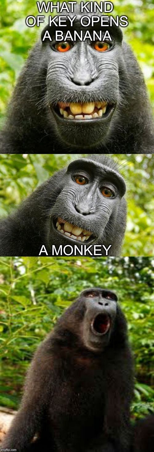 bad pun monkey | WHAT KIND OF KEY OPENS A BANANA A MONKEY | image tagged in bad pun monkey,memes,funny,funny meme,monkey,banana | made w/ Imgflip meme maker
