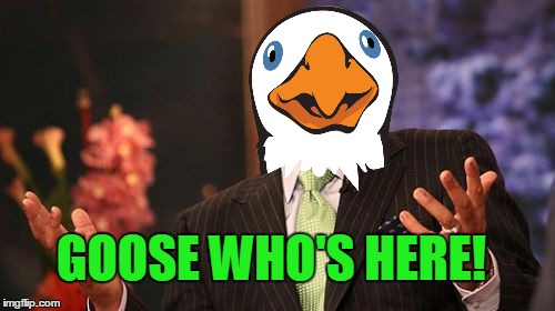 Steve Harvey Meme | GOOSE WHO'S HERE! | image tagged in memes,steve harvey | made w/ Imgflip meme maker
