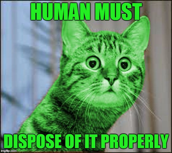 RayCat WTF | HUMAN MUST DISPOSE OF IT PROPERLY | image tagged in raycat wtf | made w/ Imgflip meme maker