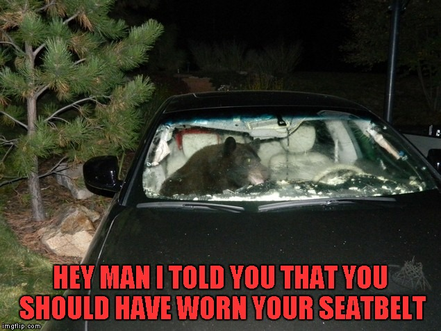 Even bears can't defy the laws of momentum... | HEY MAN I TOLD YOU THAT YOU SHOULD HAVE WORN YOUR SEATBELT | image tagged in bear passenger,memes,funny,funny animals,animals,funny bears | made w/ Imgflip meme maker