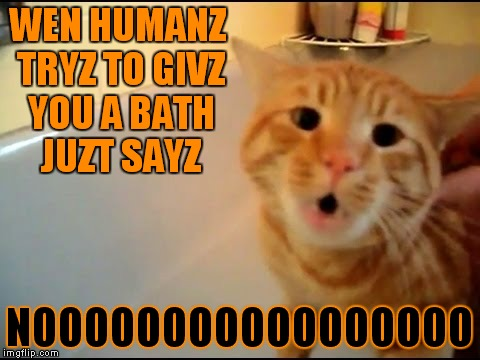I love this cat! | WEN HUMANZ TRYZ TO GIVZ YOU A BATH JUZT SAYZ NOOOOOOOOOOOOOOOOO | image tagged in cat nooo,funny cats,just say no | made w/ Imgflip meme maker