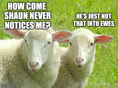 HOW COME SHAUN NEVER NOTICES ME? HE'S JUST NOT THAT INTO EWES | image tagged in sheep,bad pun | made w/ Imgflip meme maker