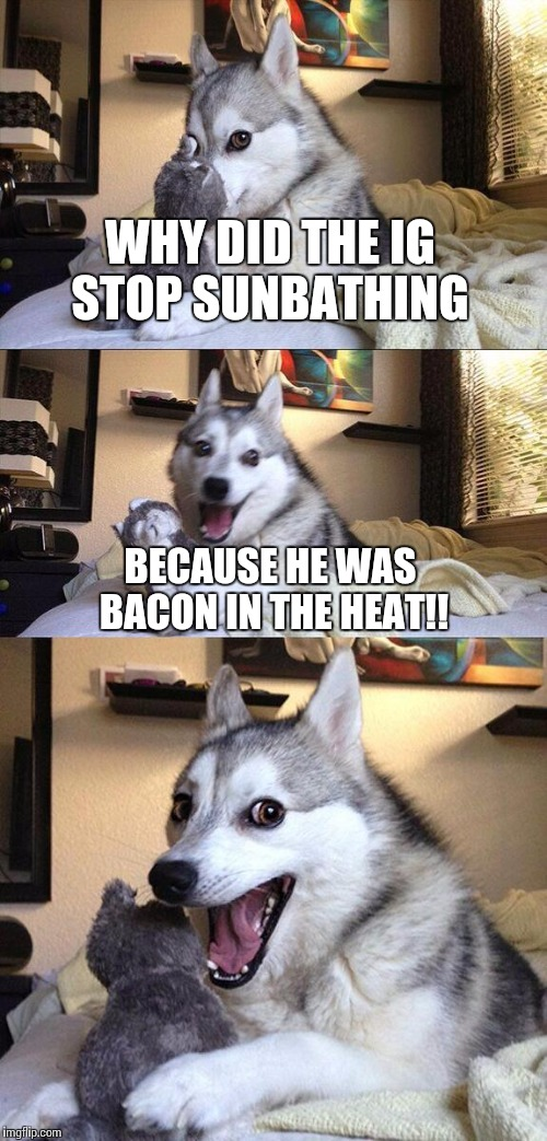 Bad Pun Dog Meme | WHY DID THE IG STOP SUNBATHING BECAUSE HE WAS BACON IN THE HEAT!! | image tagged in memes,bad pun dog | made w/ Imgflip meme maker
