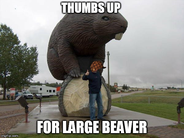 Extra Large Beaver |  THUMBS UP; FOR LARGE BEAVER | image tagged in scumbag,beaver,large,thumbs up | made w/ Imgflip meme maker