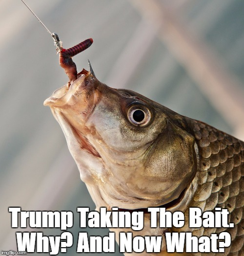 Trump Taking The Bait. Why? And Now What? | made w/ Imgflip meme maker