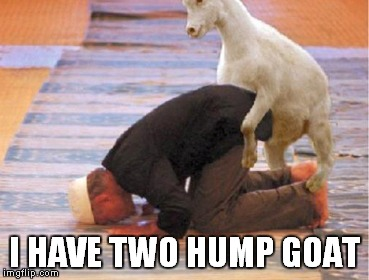I HAVE TWO HUMP GOAT | made w/ Imgflip meme maker