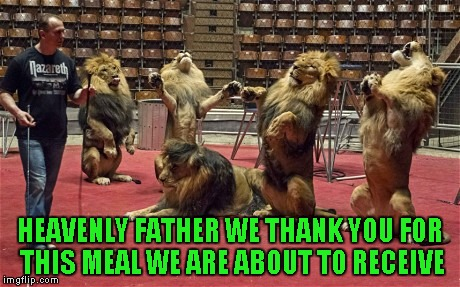 I'd sure hate to be that lion trainer... | HEAVENLY FATHER WE THANK YOU FOR THIS MEAL WE ARE ABOUT TO RECEIVE | image tagged in lions grace,memes,lions,animals,funny animals,funny | made w/ Imgflip meme maker