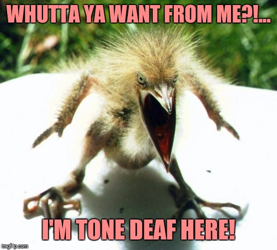 Unpleasant Bird | WHUTTA YA WANT FROM ME?!... I'M TONE DEAF HERE! | image tagged in angry bird,sewmyeyesshut,funny memes,zippidy yeay | made w/ Imgflip meme maker