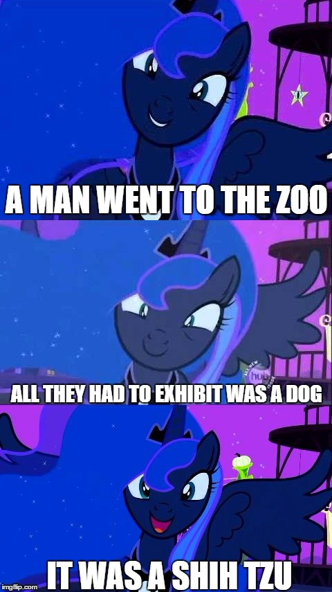 Bad Pun Luna | A MAN WENT TO THE ZOO ALL THEY HAD TO EXHIBIT WAS A DOG IT WAS A SHIH TZU | image tagged in bad pun luna,olympianproduct | made w/ Imgflip meme maker