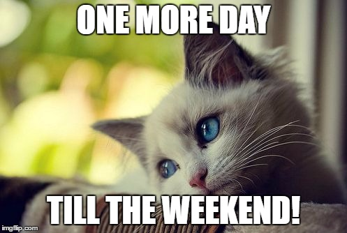 First World Problems Cat |  ONE MORE DAY; TILL THE WEEKEND! | image tagged in memes,first world problems cat | made w/ Imgflip meme maker