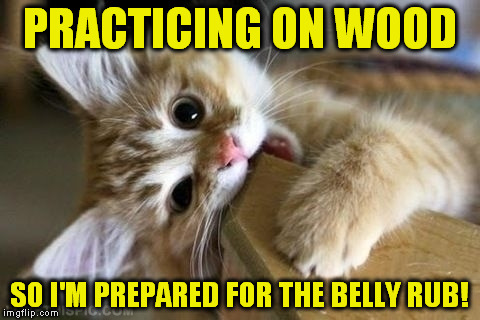 That's just silly cat (A Jying Template) Apparently his first! |  PRACTICING ON WOOD; SO I'M PREPARED FOR THE BELLY RUB! | image tagged in that's just silly cat,practice,massage,cat,funny meme,jying | made w/ Imgflip meme maker