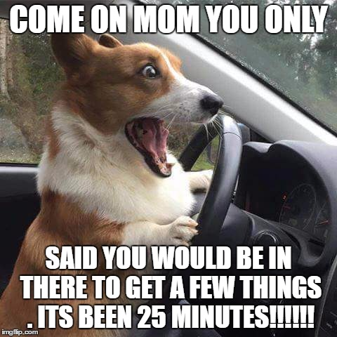 Rage Corgi |  COME ON MOM YOU ONLY; SAID YOU WOULD BE IN THERE TO GET A FEW THINGS . ITS BEEN 25 MINUTES!!!!!! | image tagged in rage corgi | made w/ Imgflip meme maker