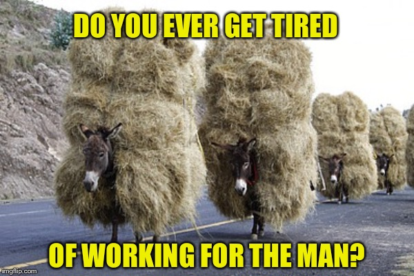 DO YOU EVER GET TIRED OF WORKING FOR THE MAN? | image tagged in work,donkey | made w/ Imgflip meme maker