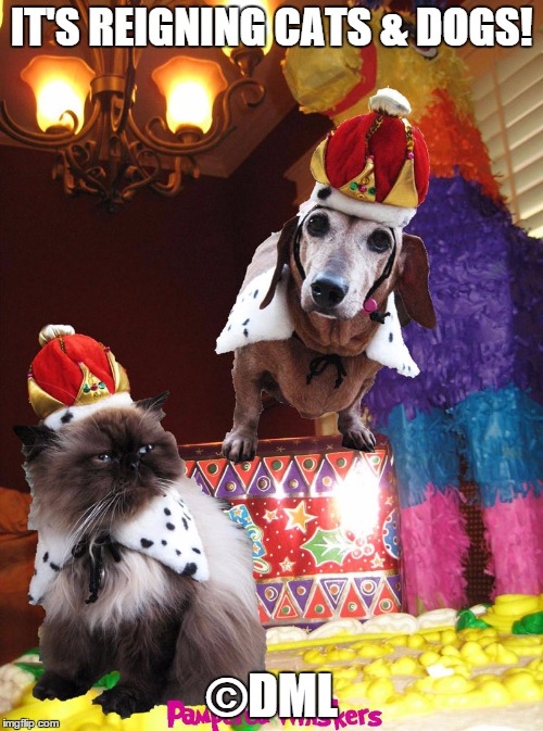 Dogs And A Cat Llc