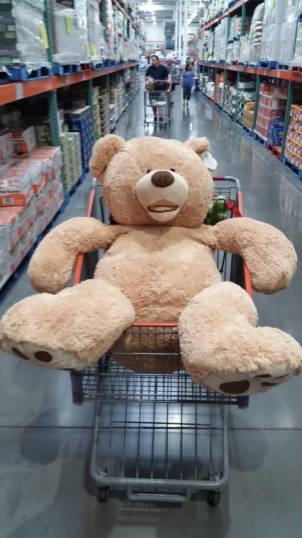 Bad teddy bear blank template imgflip bad teddy bear template maxwellsz