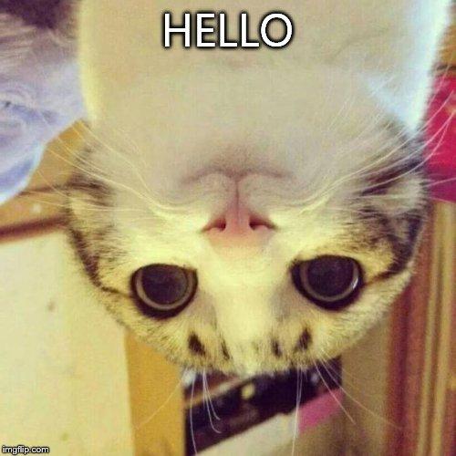 Funny Meme Hello : Smiling cat meme imgflip