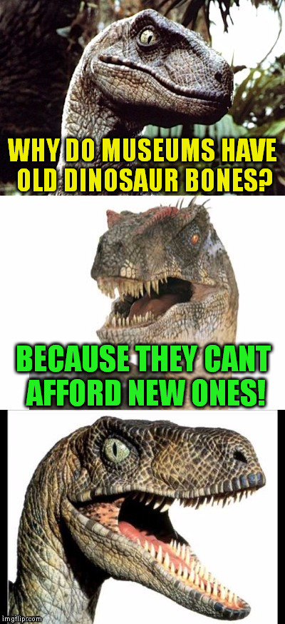 Bad Pun Velociraptor ( A Sewmyeyesshut Template) | WHY DO MUSEUMS HAVE OLD DINOSAUR BONES? BECAUSE THEY CANT AFFORD NEW ONES! | image tagged in bad pun velociraptor,funny meme,jokes,dinosaur,bones,broke | made w/ Imgflip meme maker