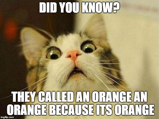 Scared Cat Meme | DID YOU KNOW? THEY CALLED AN ORANGE AN ORANGE BECAUSE ITS ORANGE | image tagged in memes,scared cat | made w/ Imgflip meme maker