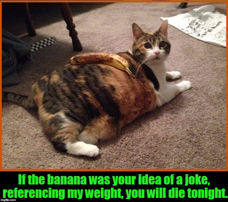 Playing a Joke on Mr. Bigglesworth | If the banana was your idea of a joke, referencing my weight, you will die tonight. | image tagged in funny cat memes,cat memes,banana,vengeful cat,vince vance,pussy cats | made w/ Imgflip meme maker