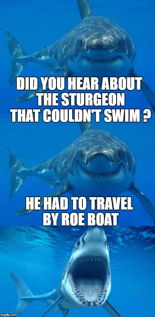 DID YOU HEAR ABOUT THE STURGEON THAT COULDN'T SWIM ? HE HAD TO TRAVEL BY ROE BOAT | made w/ Imgflip meme maker