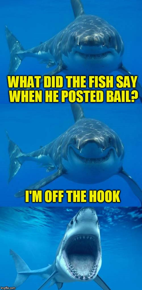 Bad Shark Pun  | WHAT DID THE FISH SAY WHEN HE POSTED BAIL? I'M OFF THE HOOK | image tagged in bad shark pun | made w/ Imgflip meme maker